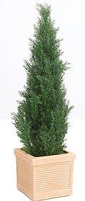 Cupressus Säule grün H=180 cm im Kunststofftopf (outdoor)
