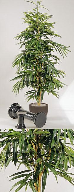Ficus longifolia 180 cm #2