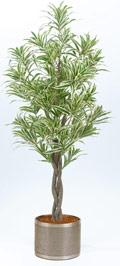 Dracaena reflexa grün-gelb 100 cm