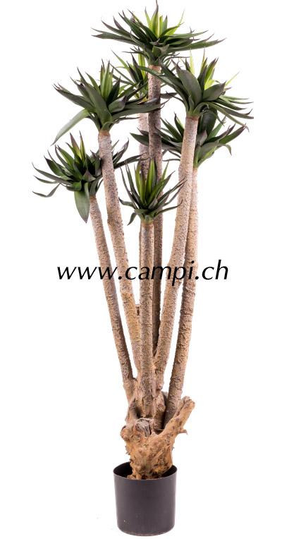 Agave Hochstamm grün 120 cm #2