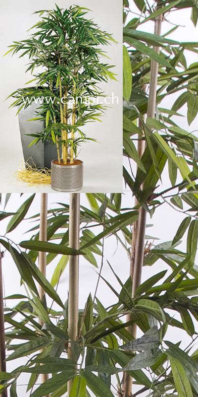 Bambus japonica 120 cm #2