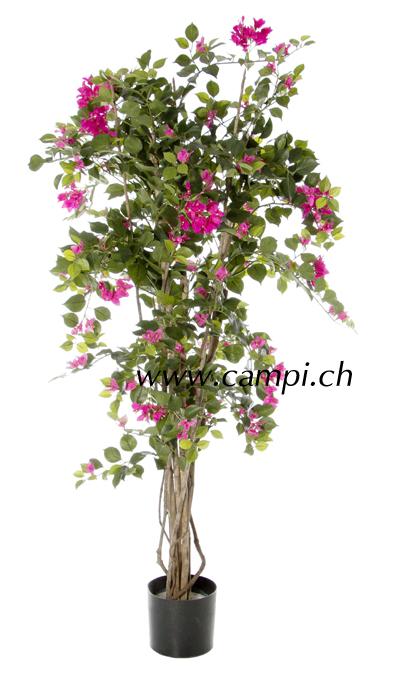Bougainvillea mit pink Blüten Ø 70 x 140 cm #2