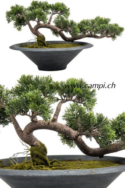 Cedern Bonsai (HxBxT) 40x74x32 cm