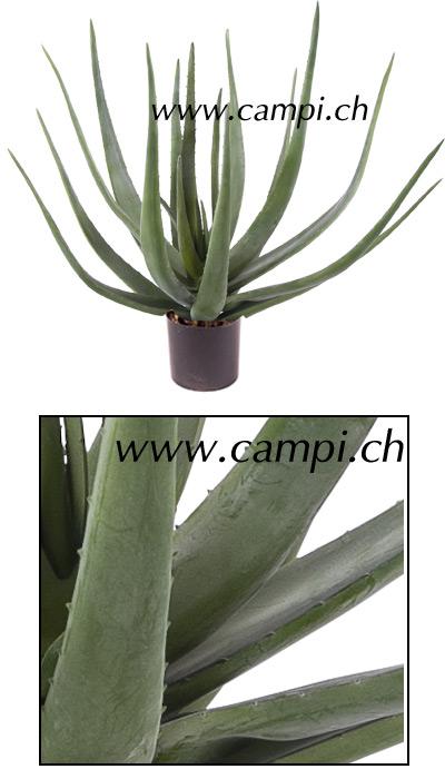 Aloe D 60 x H 55 cm #2