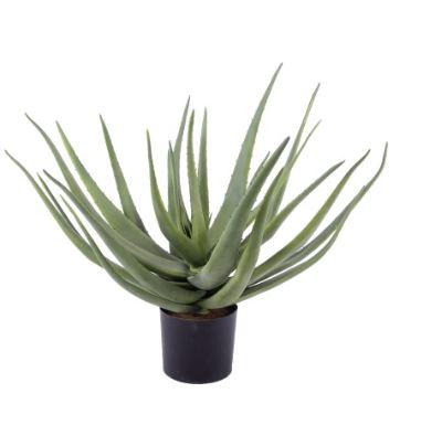 Aloe D 70 x H 70 cm