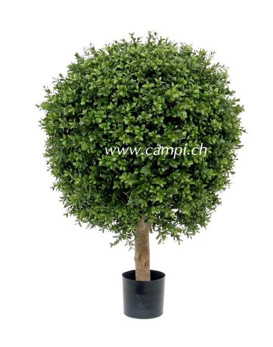 Buchsbaum Profi D=60 x H 80 cm