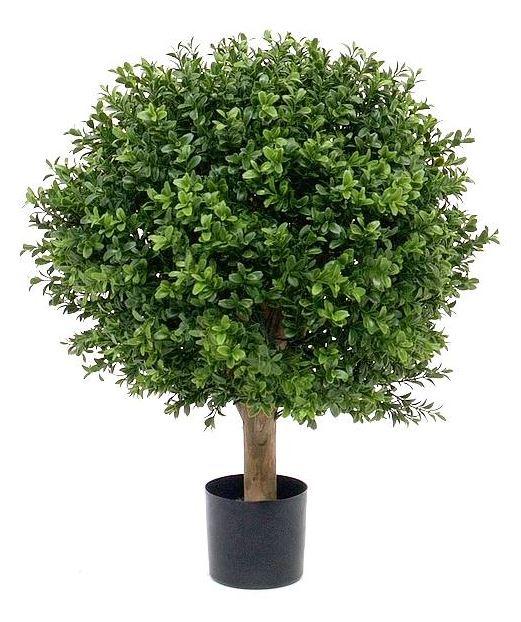 Buchsbaum Profi D=40 x H 55 cm