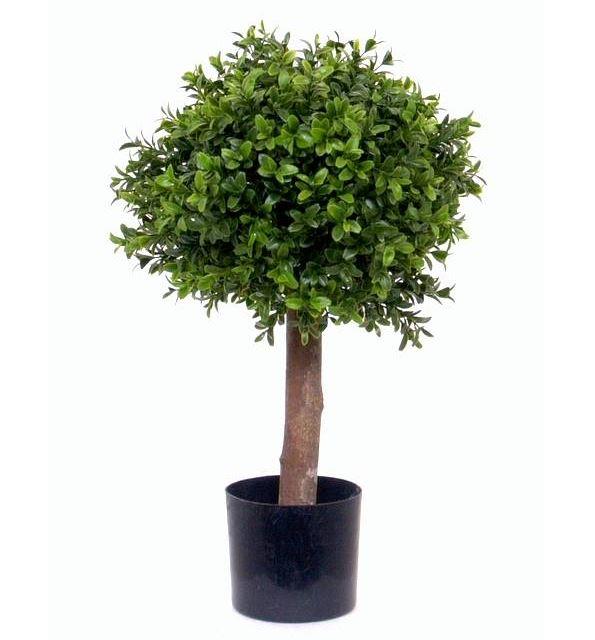 Buchsbaum Profi D=26 x H 47 cm