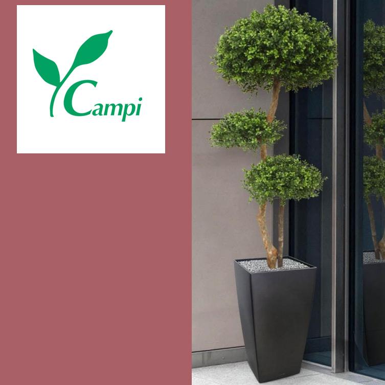 Buchsbaum mit 3 Kugeln Profi D=60 x H 140 cm #3