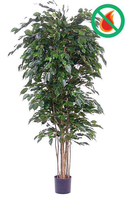 Ficus Benjamina D90 x H180cm (feuerhemmend)