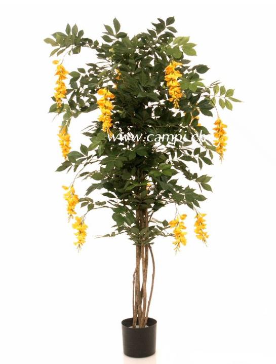 Wisteria mit Lianenstamm gelb blühend 150 cm
