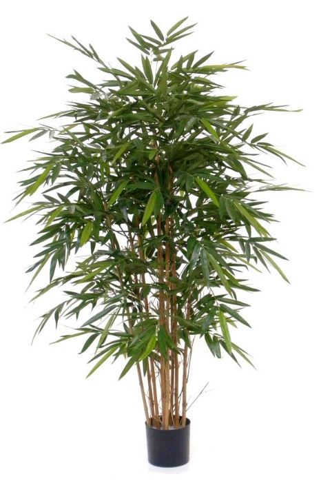 Bambus Japonica Ø85 x 150 cm