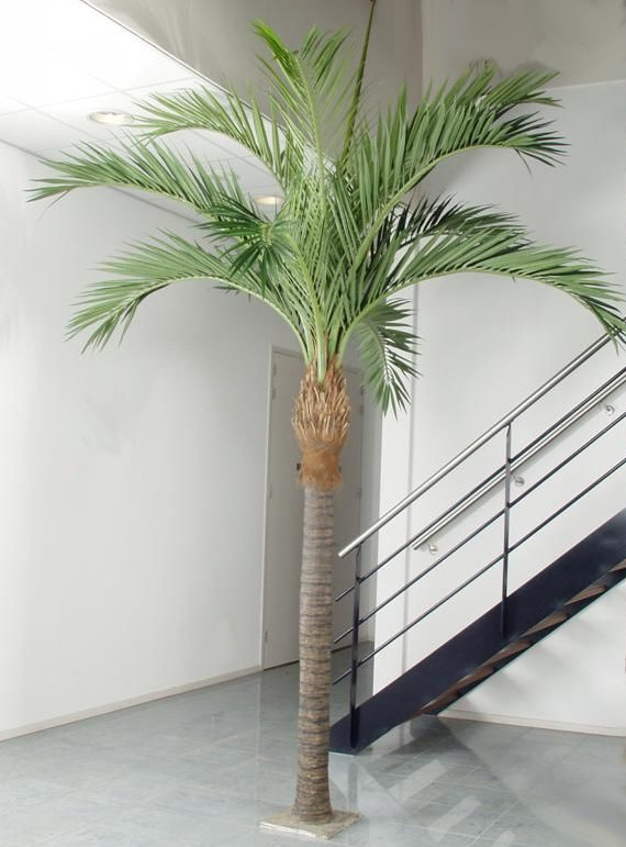 Kokospalme Phoenix Ø250 x H370 cm