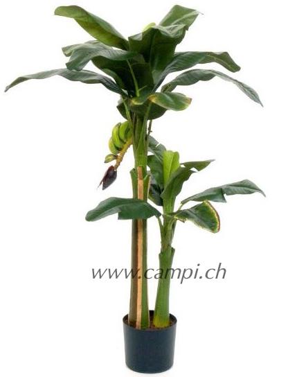 Bananenbaum mit Früchten Ø100 x H130 cm