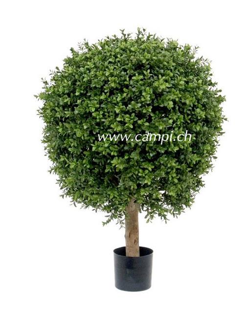 Buchsbaum Profi D=50 x H 60 cm