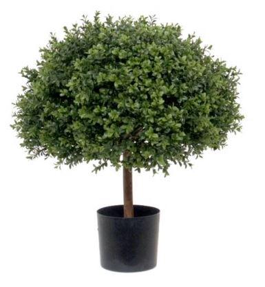 Buchsbaum-Halbkugel Profi Ø=55 x H 65 cm
