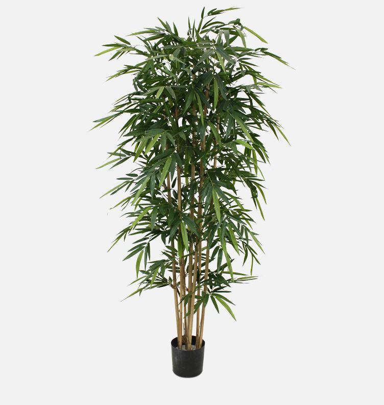 Bambus Japonica Ø85 x 200 cm