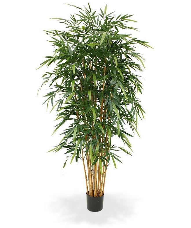 Bambus Japonica Ø110 x 210 cm Premiumline
