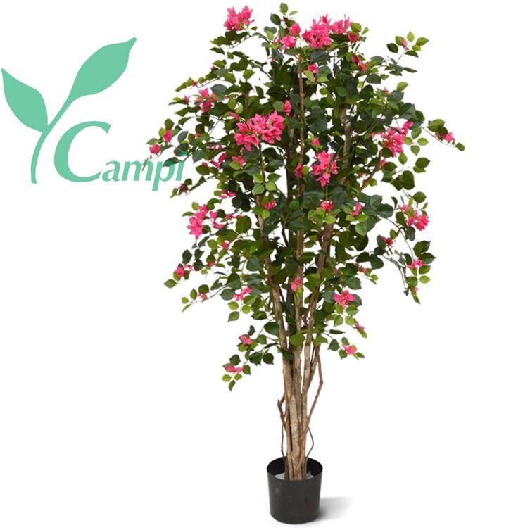 Bougainvillea mit rosa Blüten Ø 70 x 140 cm