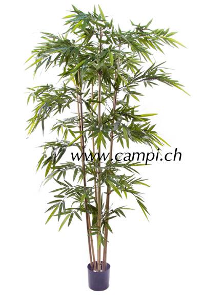 Bambus japonica 270 cm