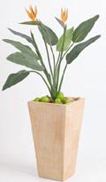 Strelitzia mit orangen Blüten 75 x 97 cm