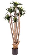 Agave Hochstamm grün 120 cm