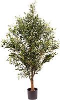 Olivenbaum mit dunklen Früchten H 115 cm