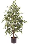 Ficus benjamina panachiert 170 cm